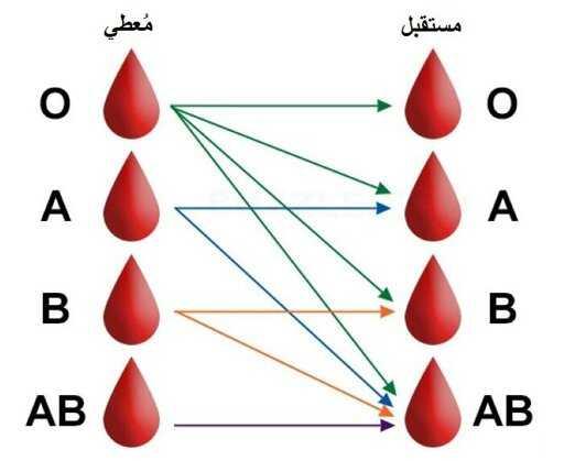 أنواع فصائل الدم ومميزاتها