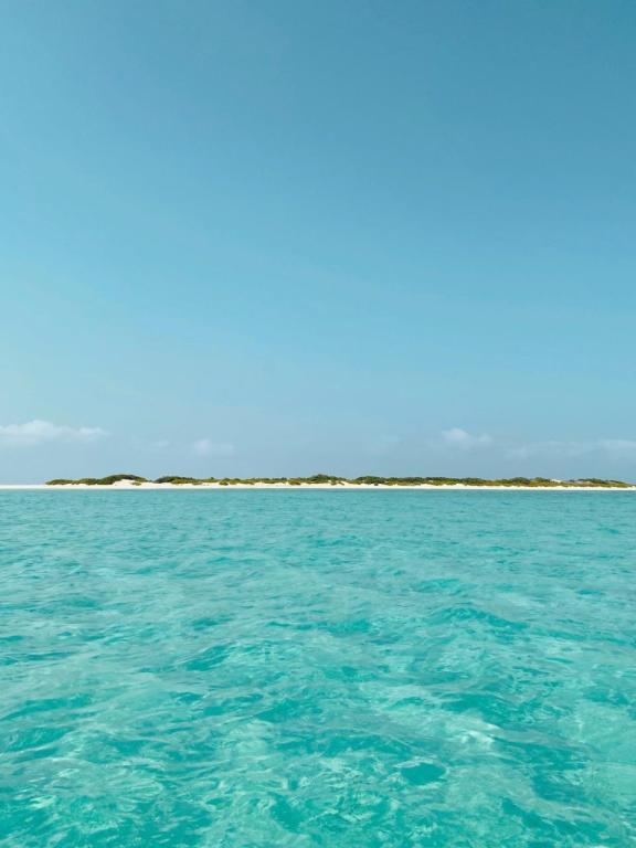 جزيرة ماركا أحد أجمل الجزر السعودية.. الملاذ الآمن لعشاق الطبيعة