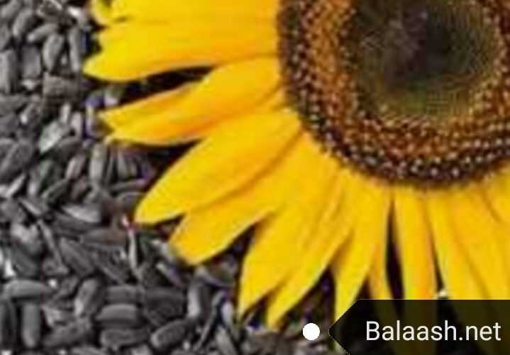 القيمة الغذائية و أهم فوائد بذور دوار الشمس على الصحة